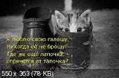 Позитивные котэ 25.04.14