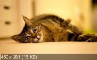 Животные на фотографиях для украшения рабочего стола. Часть 7