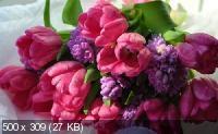 Красивые цветы в сборнике обоев для рабочего стола. Часть 5
