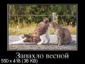 Демотиваторы '220V' 04.05.14