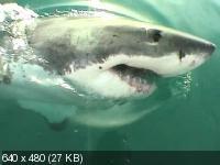 Людоеды дикой природы: акулы / Attack! Africa's maneaters - Sharks (2000) DVDRip
